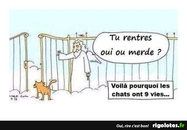 humour - Page 6 20181259