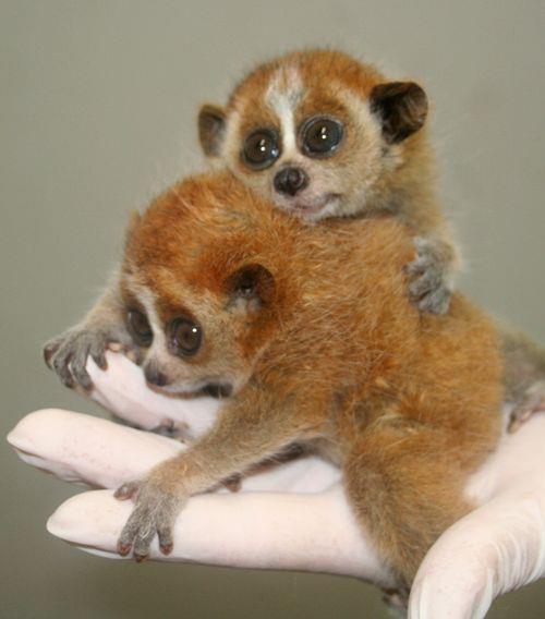 les lémuriens et les bois de Madagascar 37d7c610