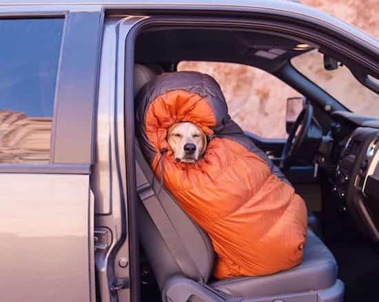 les chiens qu'on emmène en vacances Chien-11