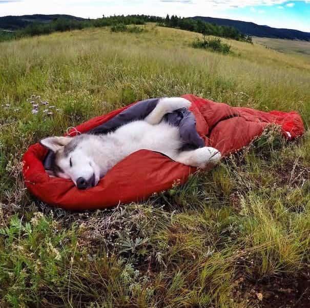 les chiens qu'on emmène en vacances Chien-12