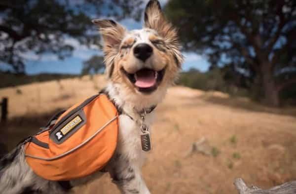 les chiens qu'on emmène en vacances Faire-10