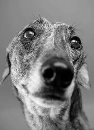 les chiens qu'on emmène en vacances Image152