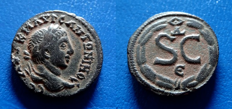 mes 2 nouveaux Elagabale... J´adore Dsc08210
