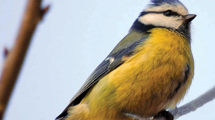 منتدى عالم الطيور و جمالها