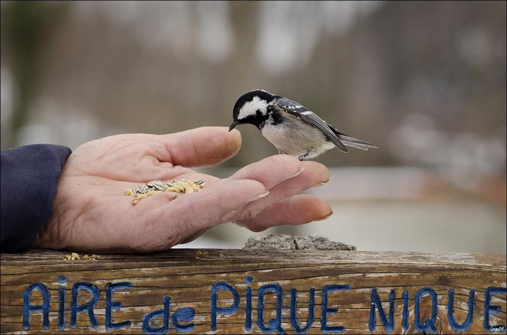 """concours du mois de mars 2020 """"Petit(s) Bonheur(s)"""" Lmb_1310"""