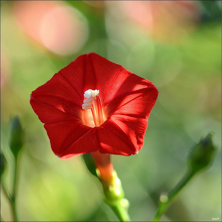 ch'tite rouge Lmb_2012