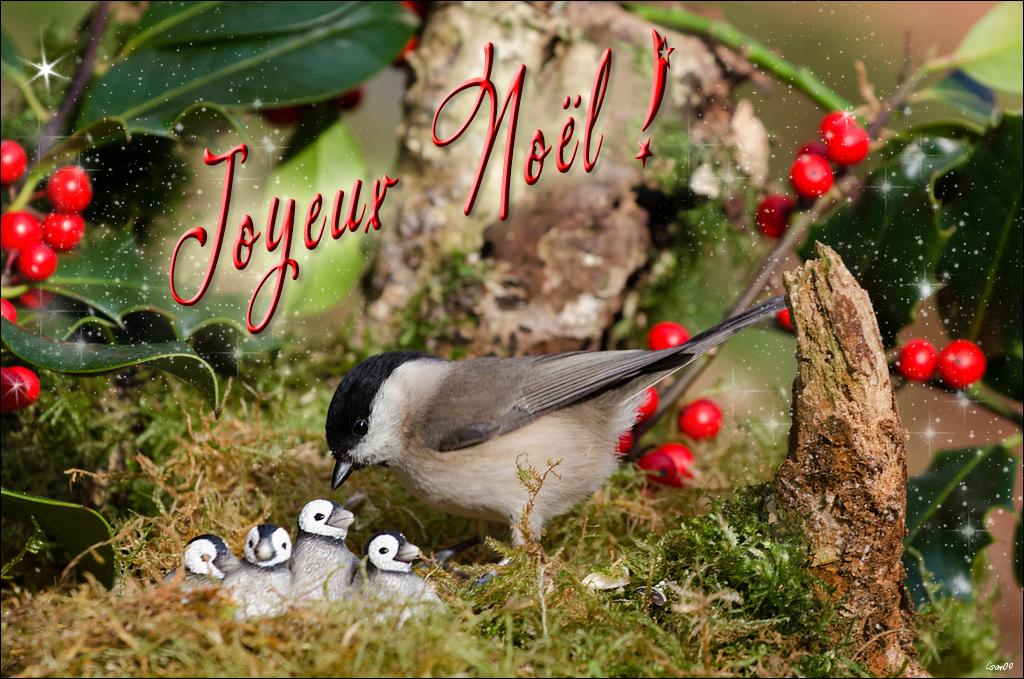 Joyeux Noël à Tous ! dans Coutumes & traditions lmb_2210