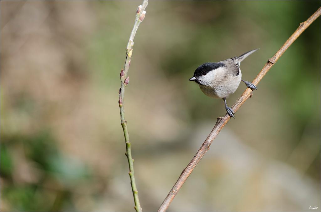 Z'oiseaux du jour Lmb_4911