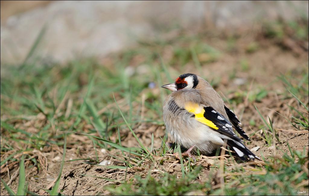 Z'oiseaux du jour Lmb_5010