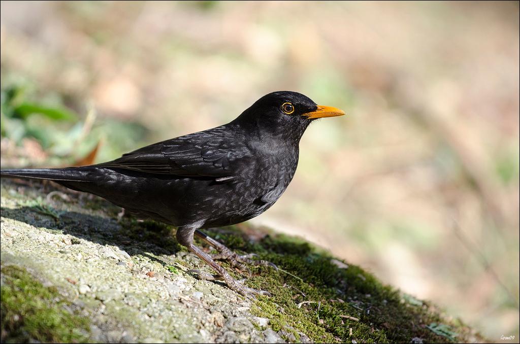 Z'oiseaux du jour Lmb_5011