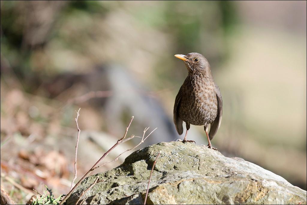 Z'oiseaux du jour Lmb_5012