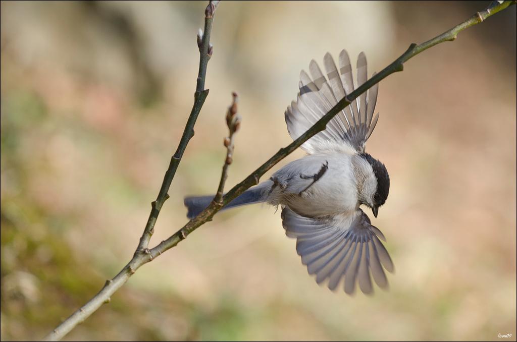 Z'oiseaux du jour Lmb_5013