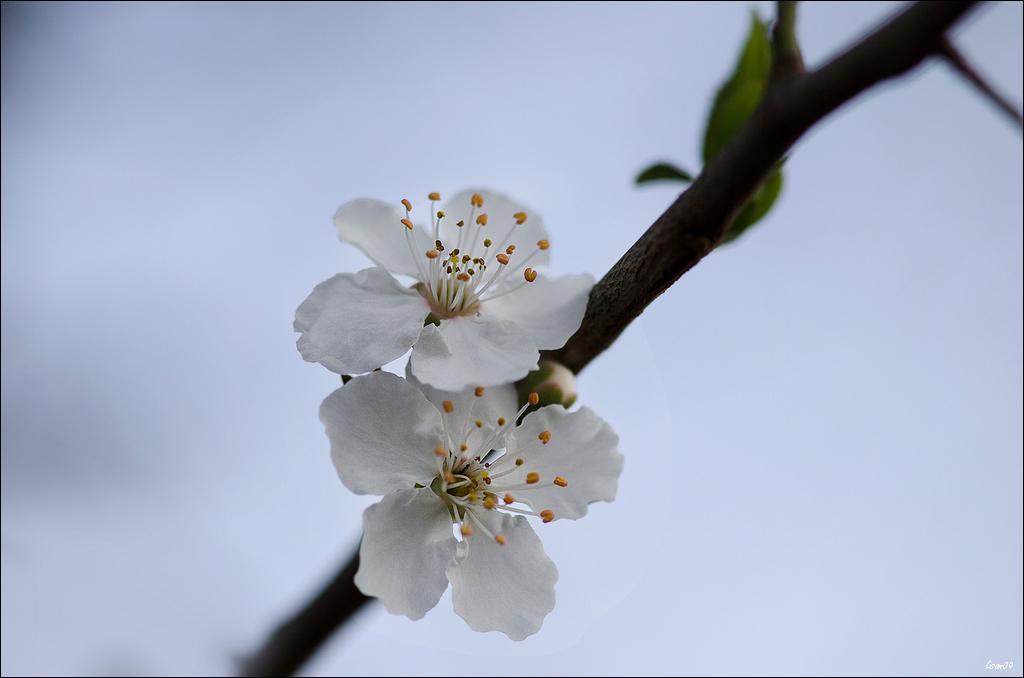 Un petit air de printemps Lmb_5711