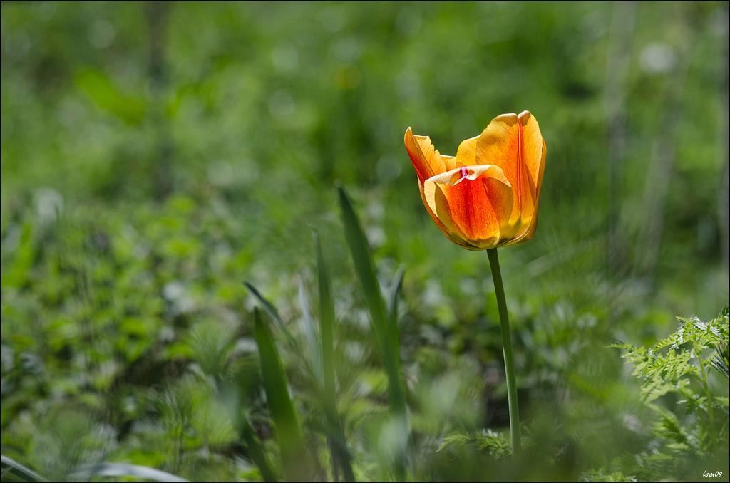 Orange et jaune Lmb_6311