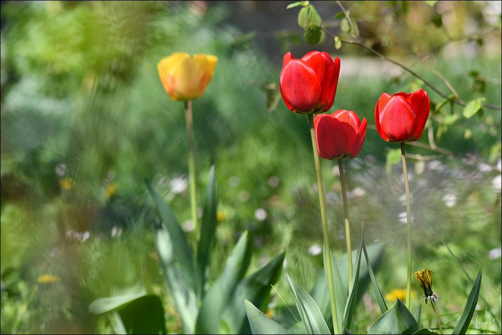 """Concours photos avril 2021 """"C'est le printemps"""" - Page 2 Lmb_7517"""