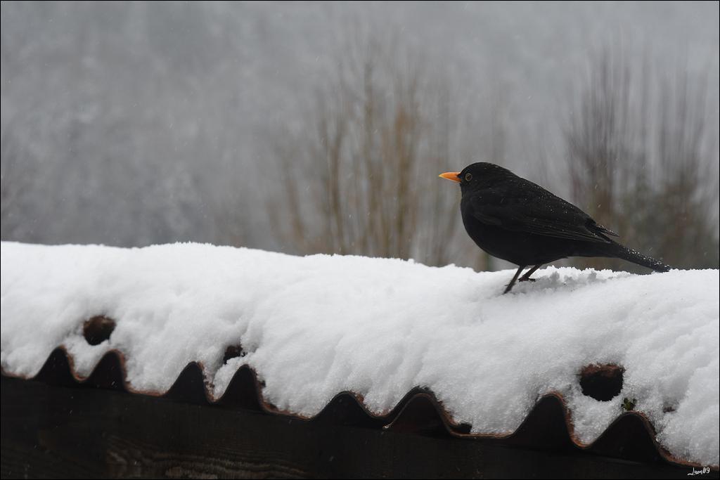 Il a un peu neigé Lmb_8112