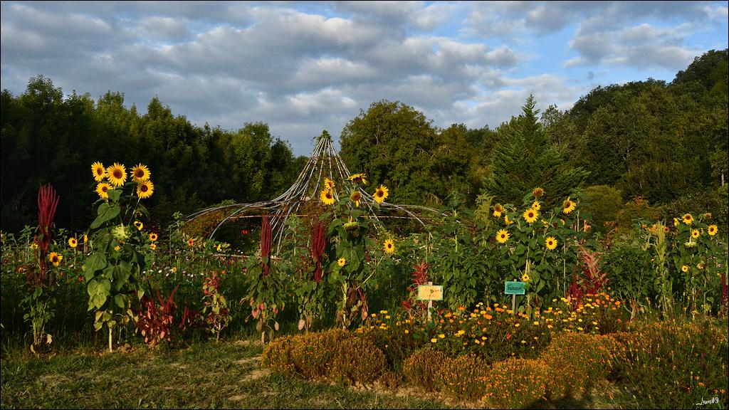 Encore un peu de l'éphémère jardin Lmb_9525