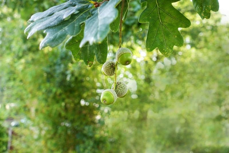 Feuille arbre jardin (si c'est ça) Mode M Passio10