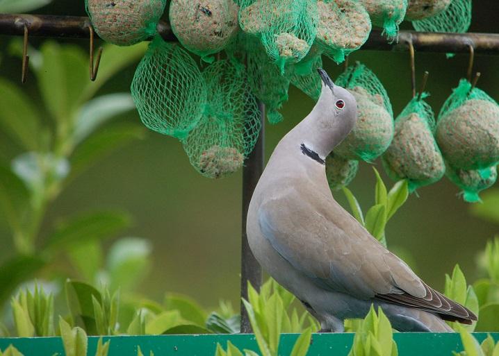 """""""Pour faire le portrait d'un oiseau""""  Dsc_7014"""