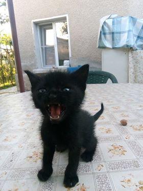 Котёнки, коты, кошечки и кошководы и... псы :-) - Страница 46 41432010