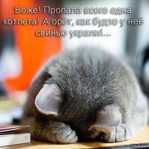 Котёнки, коты, кошечки и кошководы и... псы :-) - Страница 45 41939010