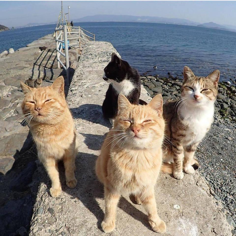 Котёнки, коты, кошечки и кошководы и... псы :-) - Страница 46 42363010