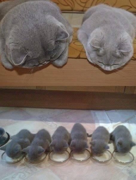 Котёнки, коты, кошечки и кошководы и... псы :-) - Страница 45 42405810