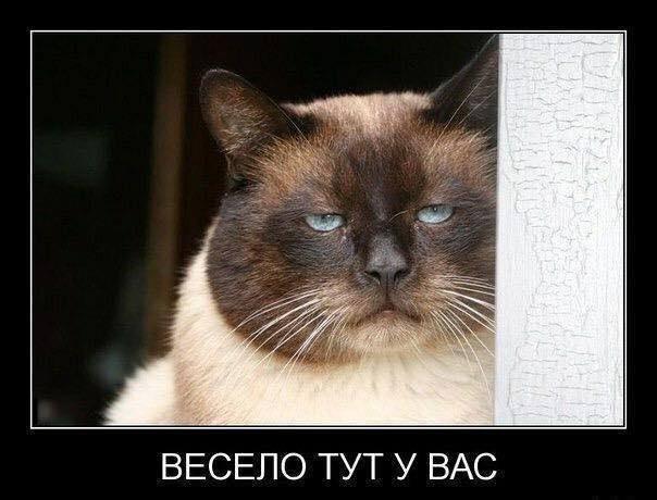 Котёнки, коты, кошечки и кошководы и... псы :-) - Страница 46 42993610