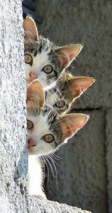 Котёнки, коты, кошечки и кошководы и... псы :-) - Страница 46 43087710