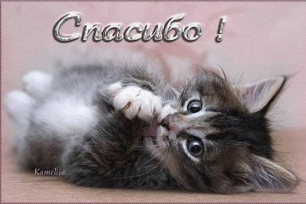 Котёнки, коты, кошечки и кошководы и... псы :-) - Страница 45 Ysuqxw10