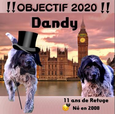 DANDY - griffon 11 ans (10 ans de refuge)    - Refuge Animalier de Brax (47) Bandic15