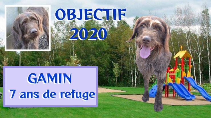 GAMIN - korthal 9 ans  ( 7 ans de refuge)   Spa de Toulouse (31) Bandic17