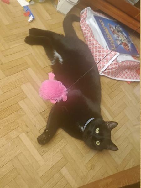 Perdue chatte noire sur Saint Germain Lembron Onyx13