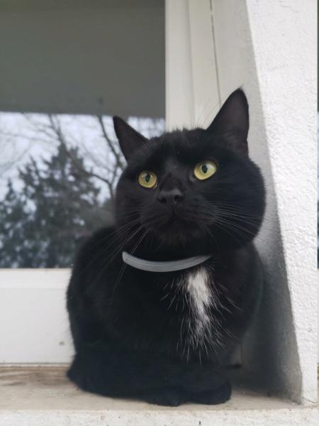 Perdue chatte noire sur Saint Germain Lembron Onyx213