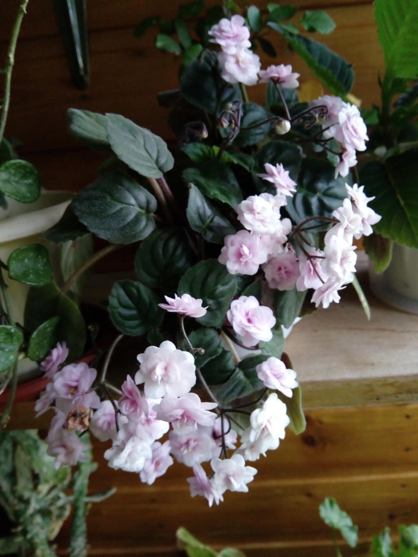 Моё цветочное богатство - Страница 33 Img_2012