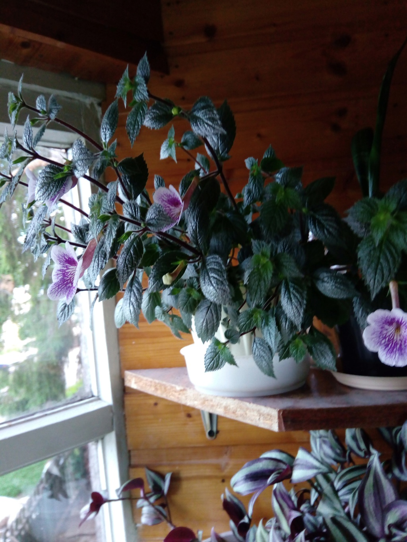 Моё цветочное богатство - Страница 33 Img_2014
