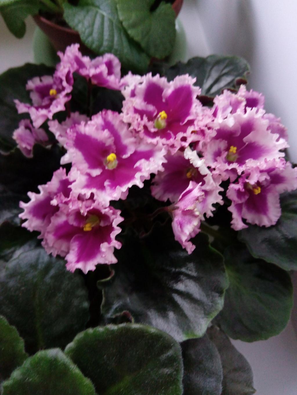 Моё цветочное богатство - Страница 33 Img_2016