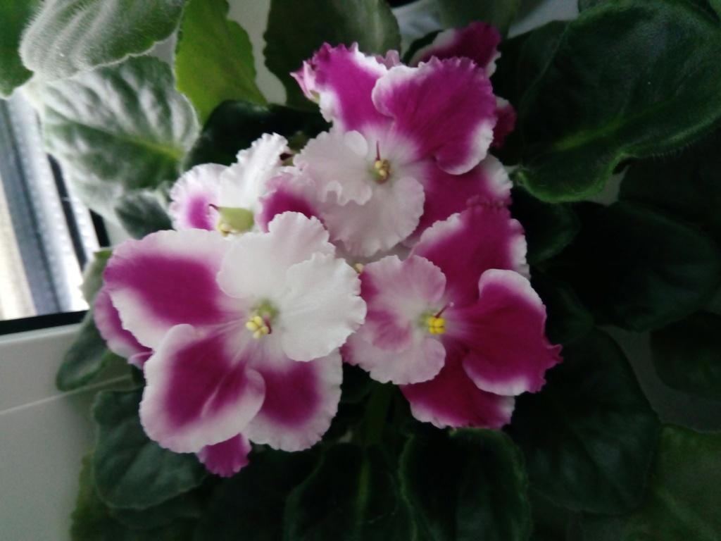 Моё цветочное богатство - Страница 33 Img_2019