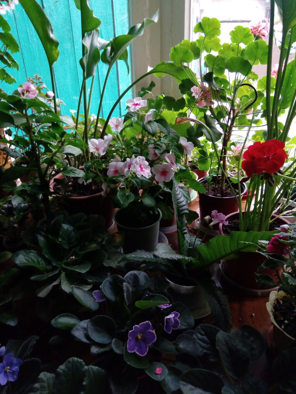Моё цветочное богатство - Страница 35 Img_2028