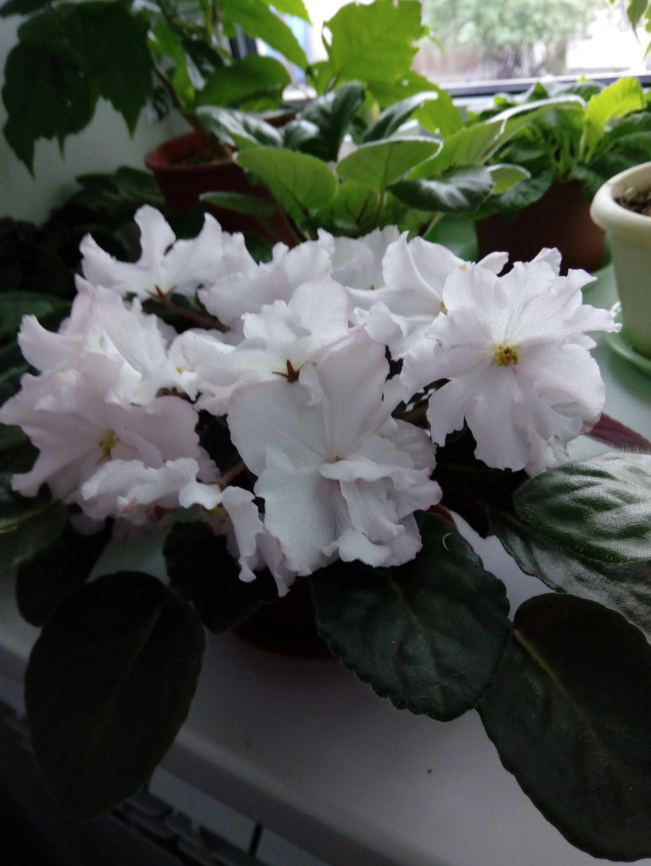 Моё цветочное богатство - Страница 35 Img_2030
