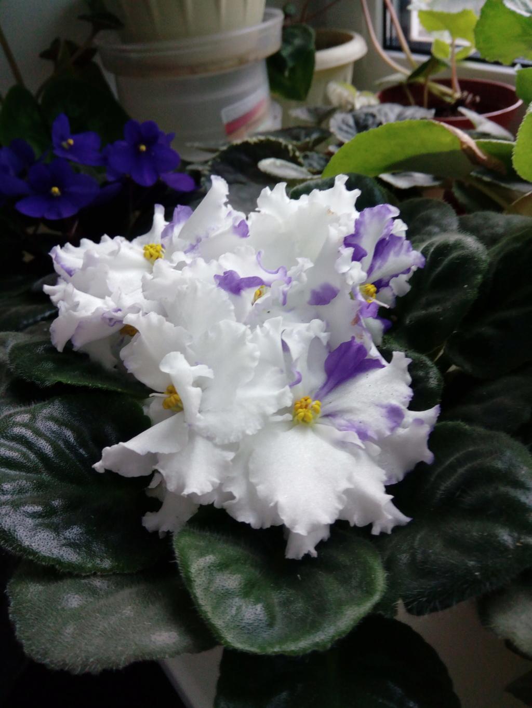 Моё цветочное богатство - Страница 35 Img_2031