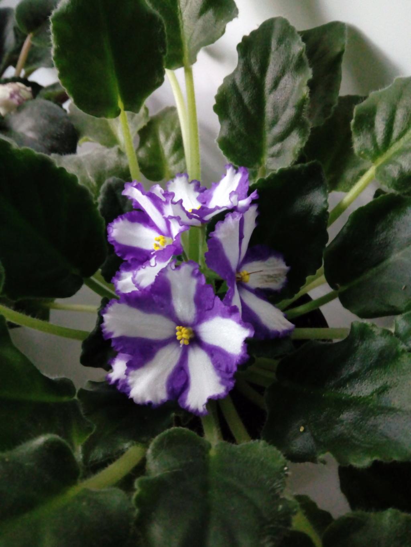 Моё цветочное богатство - Страница 35 Img_2033