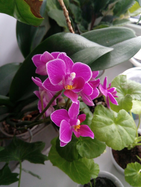 Орхидеи - Страница 25 Img_2036