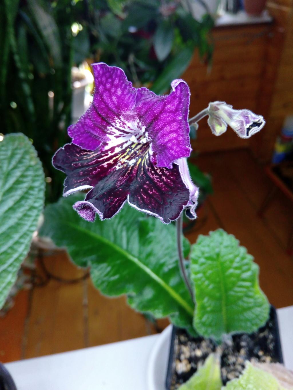 Моё цветочное богатство - Страница 35 Img_2038