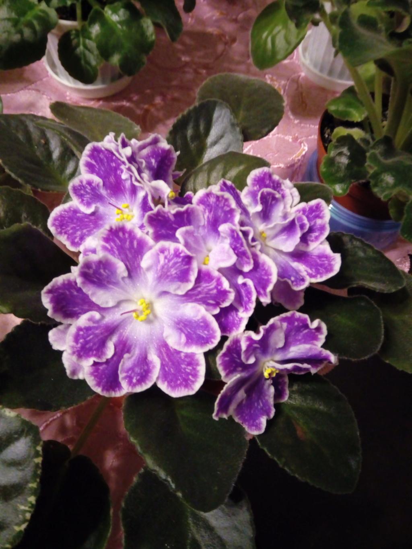 Моё цветочное богатство - Страница 36 Img_2043