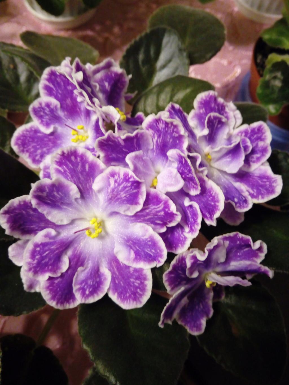 Моё цветочное богатство - Страница 36 Img_2044