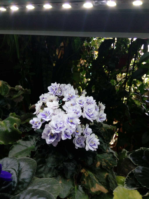 Моё цветочное богатство - Страница 36 Img_2045
