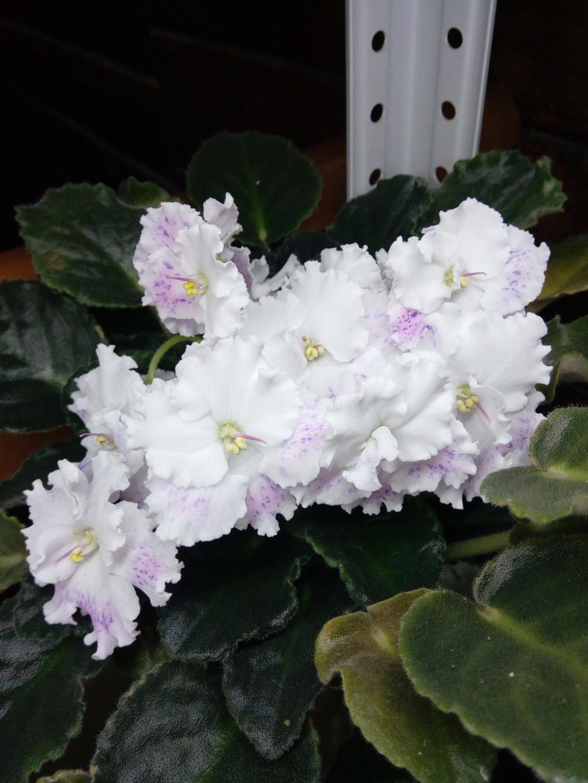 Моё цветочное богатство - Страница 36 Img_2048