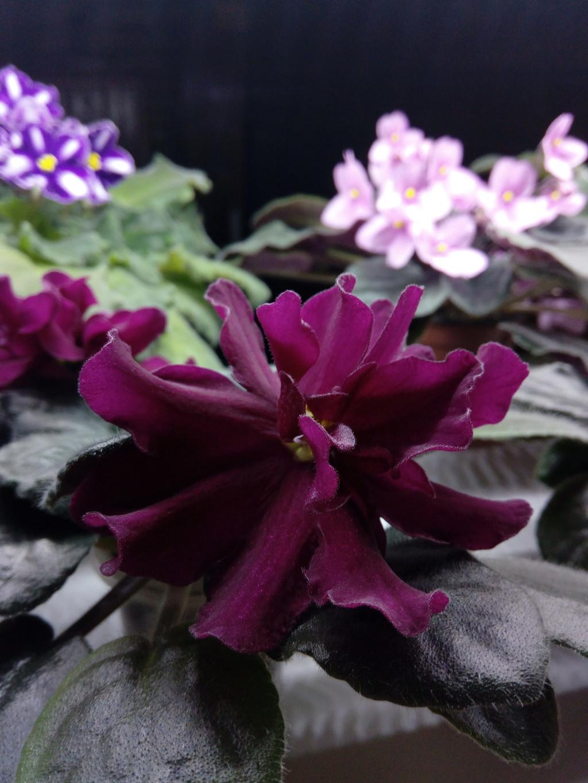 Моё цветочное богатство - Страница 36 Img_2049