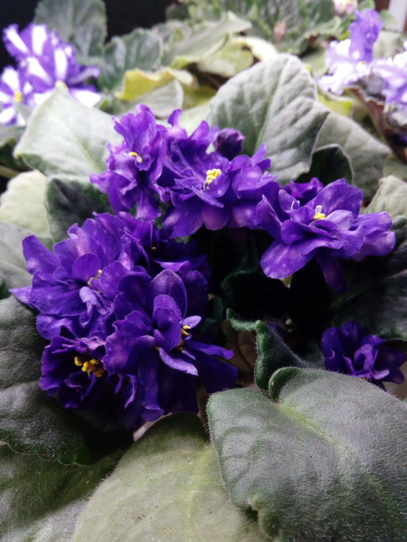 Моё цветочное богатство - Страница 36 Img_2050